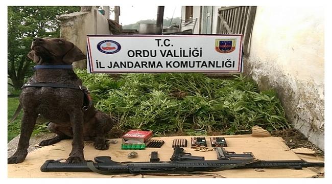 Jandarma iki kişiyi gözaltına aldı