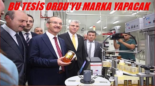 BAL DENİNCE; ORDU