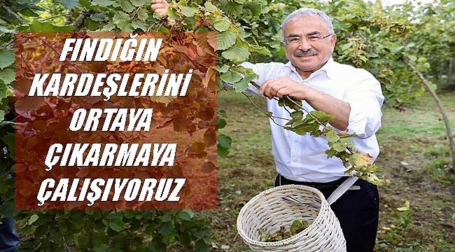 Başkan Güler: Fındığın değerini arttırmak kendi elimizde