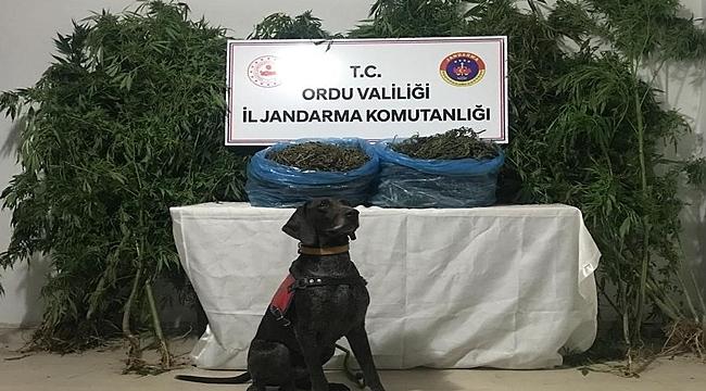 Ordu'da uyuşturucu operasyonu 1 kişi tutuklandı