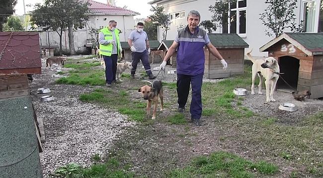 Hayvanseverlerden Büyükşehire destek sürüyor