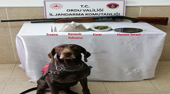 Ordu'da uyuşturucu operasyonu 1 kişi gözaltına alındı