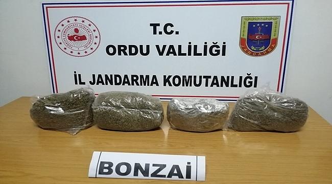 Ordu'dan uyuşturucudan 3 kişi gözaltına alındı