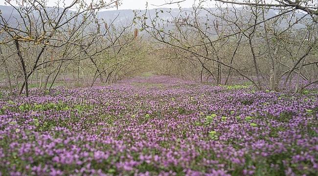 Fındıkta İlkbahar için zirai uygulama önerileri