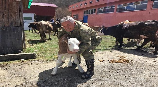 Mesudiye Hayvancılık Üssü Oldu