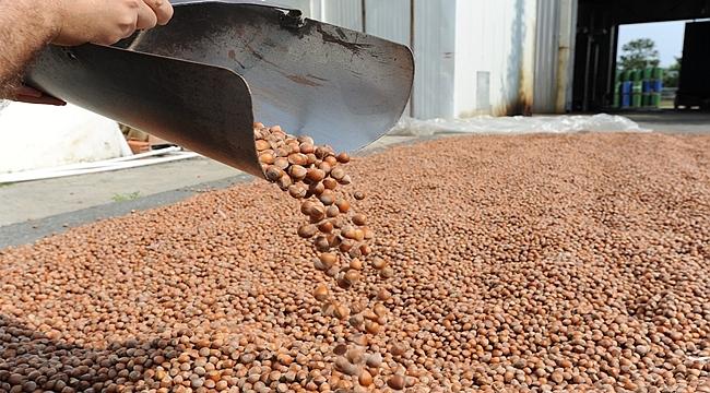 Fındıkta stokçular ihracatçıları tehdit ediyor