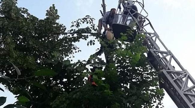 Ağaçta beyin kanaması geçirdi