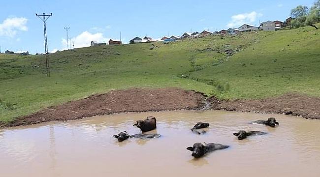 Mandalar için gölet yapıldı