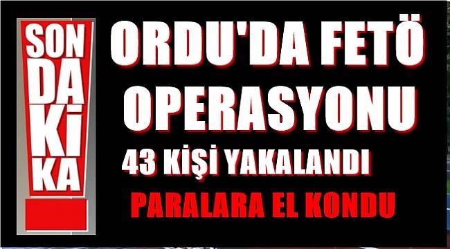 Ordu'da FETÖ operasyonu 43 kişi yakalandı