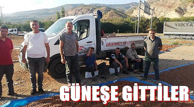 Ordulu üreticiler fındıklarını kurutmak için Sivas ve Tokat'a gidiyor