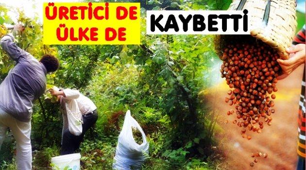 FINDIKTA HERKES KAYBETTİ