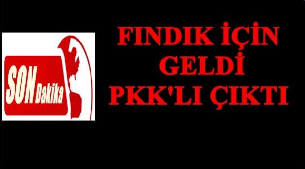 ORDU'DA PKK ÜYESİ YAKALANDI